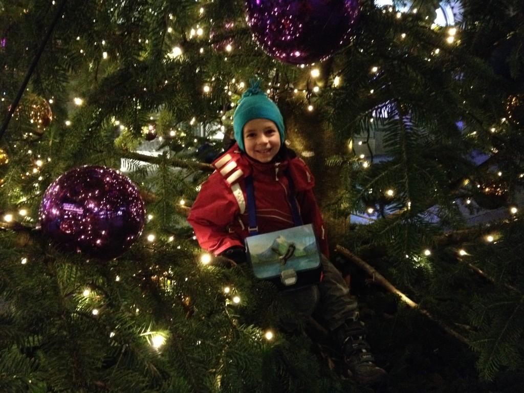Darjan im Weihnachtsbaum